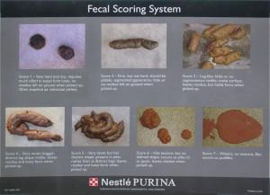 fecal-scoring-chart1-300x217